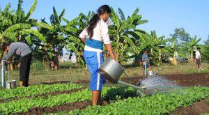 Kinderdorf Light of Hope in Kambodscha, CFI-Kinderhife, Kinderhilfe, Gemüsegarten,
