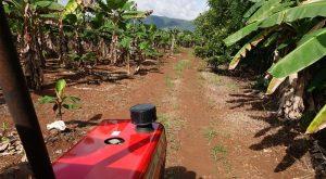 Hochwertige Lebensmittel durch eigenen Anbau, Selbstversorgung im Kinderdorf las Palmas
