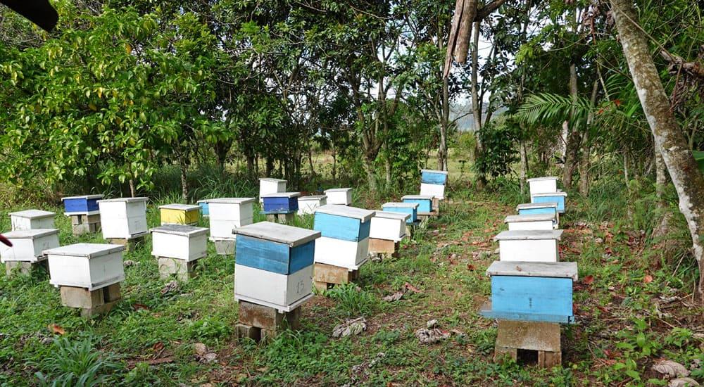 """Bienenprojekt im CFI-Kinderdorf Dom. Rep., Das Kinderdorf """"Las Palmas"""" in der Dominikanischen Republik"""