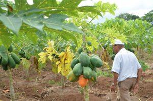 Eigene Landwirtschaft im CFI-Kinderdorf