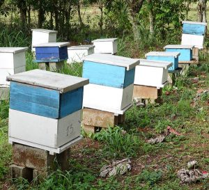 CFI, nachhaltige Entwicklungshilfe, Bienenprojekt, Kinderdorf DomRep,