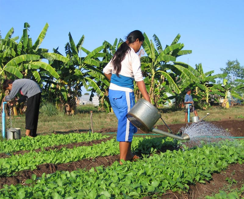 Kinderdorf_Kambodscha_Landwirtschaft